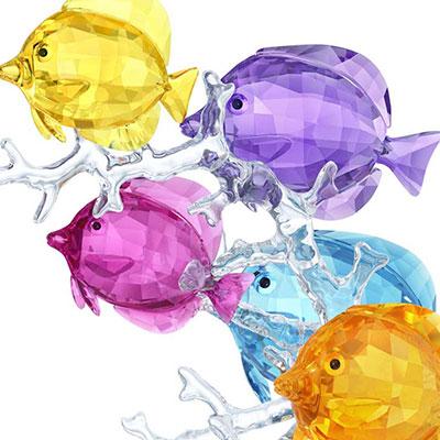 Swarovski Rainbow Fish Family