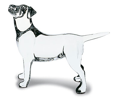 Baccarat Labrador Dog