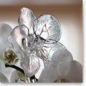 Waterford Crystal Fleurology Orchid Flower