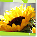 Premium Greeting Card, Sunflower