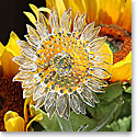 Waterford Crystal Fleurology Flower Sunflower